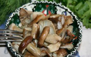 Как солить грибы рядовки холодным способом: видео засолки, рецепты соления домашних заготовок