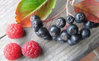 Компот из черноплодной рябины на 3-литровую банку на зиму — простой пошаговый рецепт