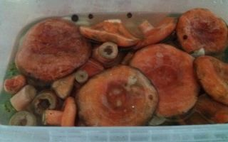 Рыжики горячим способом на зиму — 14 рецептов соленых, маринованных рыжиков в банках