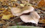 Как правильно сушить опята в электросушилке: рецепты и видео сушки грибов на зиму