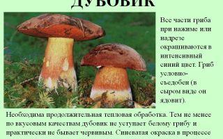 Мицелий и субстрат для выращивания грибов в домашних условиях: хранение, размножения и обработка