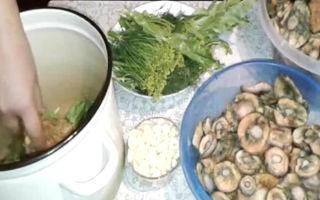 Что делать с большими рыжиками: можно ли солить крупные грибы и как это делать