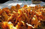 Польза и вред сырых, сушеных лисичек для здоровья: чем полезны грибы и чем вредны