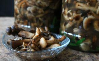 Маринованные опята на зиму — 5 простых и самых вкусных рецептов приготовления с фото пошагово