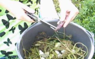 Засолка огурцов без стерилизации на зиму — 28 рецептов хрустящих огурцов в банках с пошаговыми фото