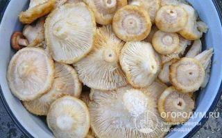 Маринованные грузди на зиму — рецепт приготовления с пошаговыми фото