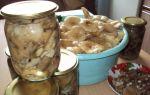 Сыроежки на зиму: фото, рецепты приготовления грибов с пошаговой инструкцией