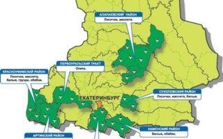 Где растут опята в екатеринбурге и свердловской области: самые грибные места