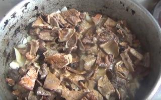 Рецепты блюд из сушеных рыжиков: как готовить грибы в домашних условиях