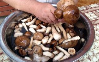 Как правильно мыть свежие грибы опята после леса: видео и советы грибникам