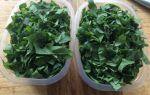 Щавель на зиму — 18 рецептов заготовок с пошаговыми фото