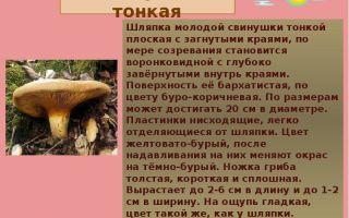 Фото и описание гриба свинушки, признаки бархатного пластинника