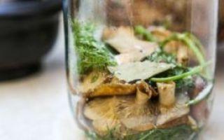 Соленые волнушки на зиму — рецепт с пошаговыми фото
