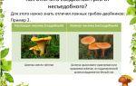 Как отличить ложные лисички от настоящих: фото, видео съедобных грибов и их несъедобных двойников