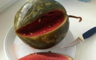 Мочёный арбуз на зиму — пошаговый рецепт с фото
