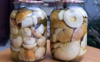 Маринование белых грибов в домашних условиях: рецепты с фото, видео, где показаны все способы обработки