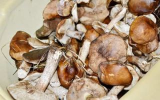 Маринованные боровики с 9% уксусом на зиму — рецепт с пошаговыми фото