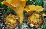 Рецепты жульенов с грибами лисичками: фото, как приготовить грибной жульен с лисичками