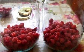 Компот из вишни и малины на 3-х литровую банку на зиму — простой рецепт от автора