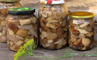 Рядовка на зиму — {сount} заготовок гриба рядовка с пошаговыми фото