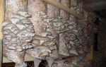 Выращивание грибов вешенок: фото и видео, условия и оборудование камер для разведения вешенок
