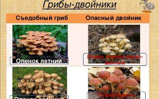 Рецепты маринованных маслят под капроновыми крышками: как мариновать грибы