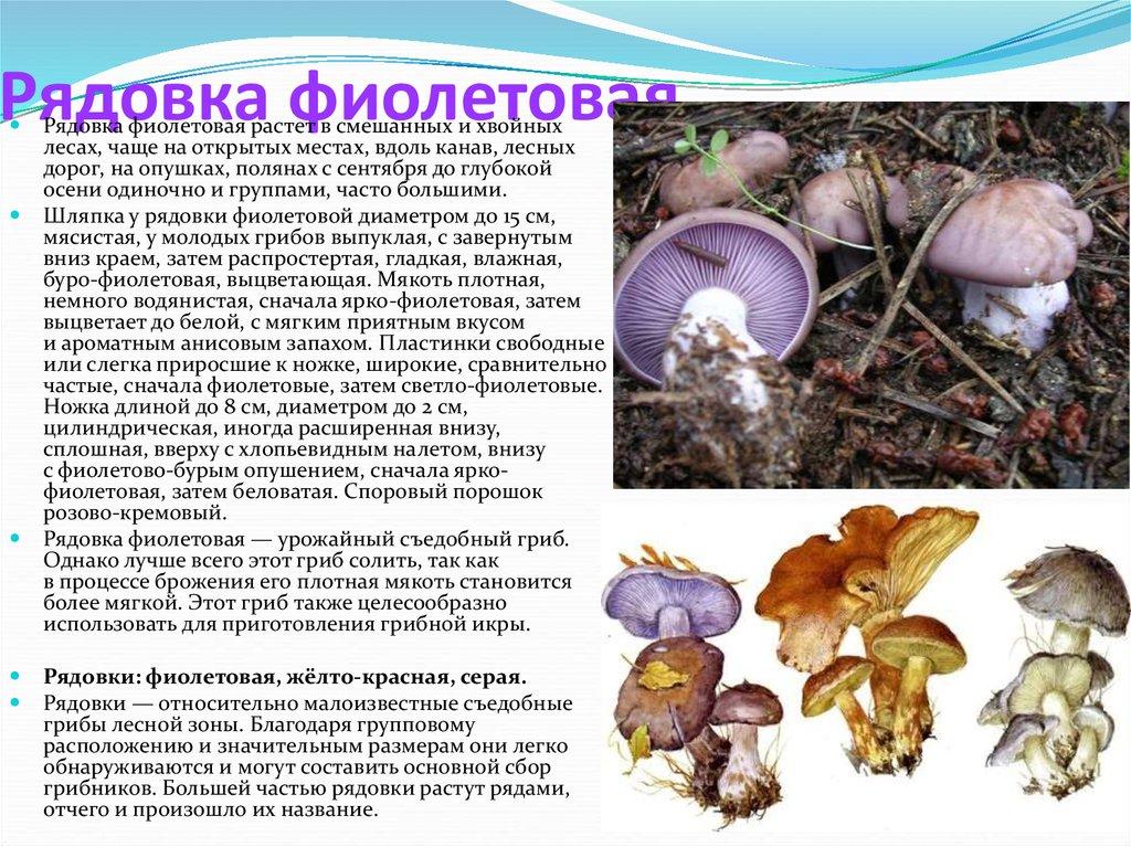 изделия перепончатые грибы с описанием и фото еще демонстрировать
