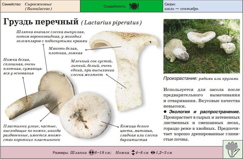 Маринованные грибы синие ножки: рецепты и видео, как правильно мариновать грибы синие ножки