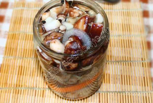Маринованные грибы подтопольники на зиму