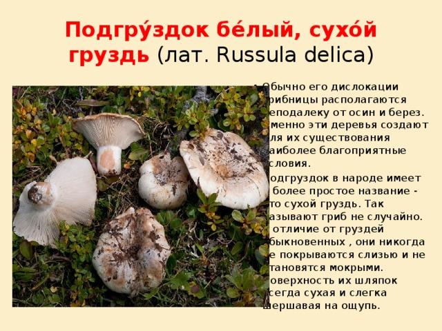 Грузди грибы ложные как отличить