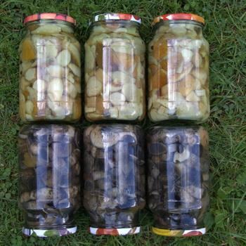 Чтобы грибы соленые не плесневели. Соленые грибы, подскажите, научите...выручайте!