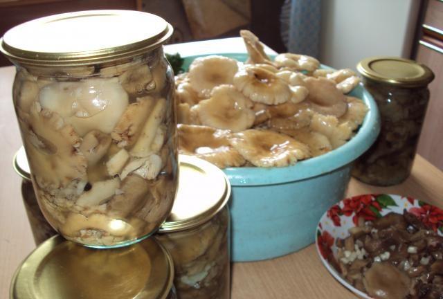 что делать с сыроежками грибами на зиму