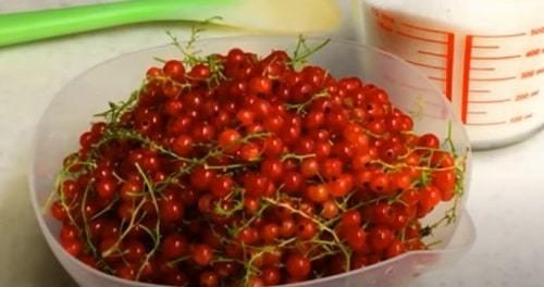 Густое желе-пятиминутка из красной смородины на зиму - 17 рецептов простых и вкусных с пошаговыми фото
