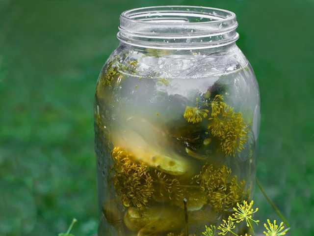 Засолка огурцов без уксуса на зиму - 26 рецептов хрустящих огурцов в банках с пошаговыми фото