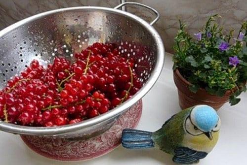 Компот из красной смородины не на зиму - рецепт приготовления с пошаговыми фото