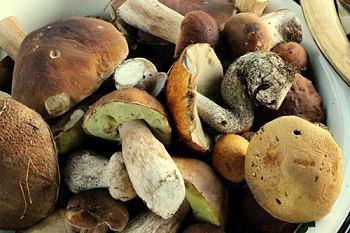 Засолка грибов на зиму - 83 рецепта в банках с пошаговыми фото