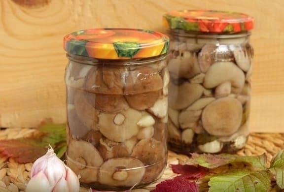 Солянка из маслят на зиму - рецепт приготовления с пошаговыми фото