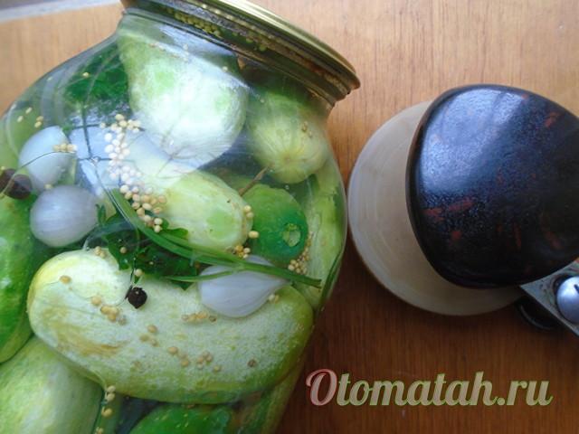 Огурцы с петрушкой на зиму - 13 рецептов хрустящих огурцов в банках