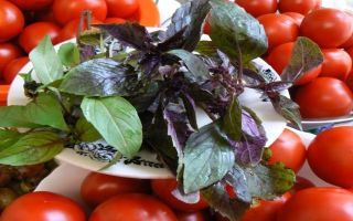 Помидоры половинками с базиликом на зиму - рецепт с пошаговыми фото