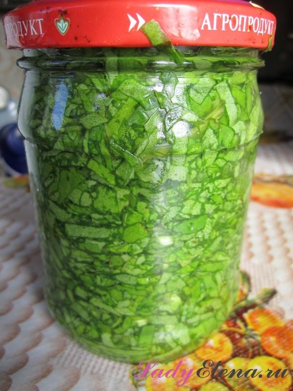 Щавель без соли в банках на зиму - 8 рецептов заготовок с пошаговыми фото