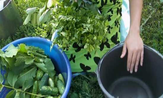 Засолка огурцов без стерилизации на зиму - 28 рецептов хрустящих огурцов в банках с пошаговыми фото