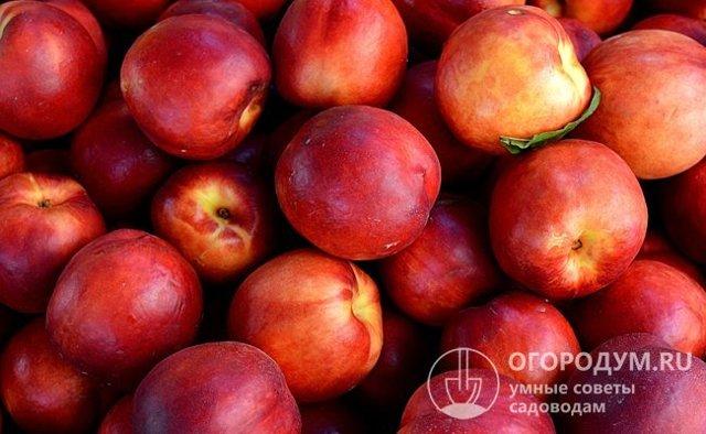Варенье из нектаринов на зиму - 5 простых рецептов с фото пошагово