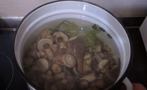 Подберезовики на зиму -  19 рецептов заготовок с пошаговыми фото