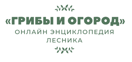 Маринованные волнушки на зиму - простой рецепт от автора пошагово