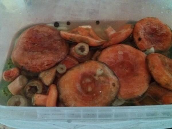 Рыжики горячим способом на зиму - 14 рецептов соленых, маринованных рыжиков в банках