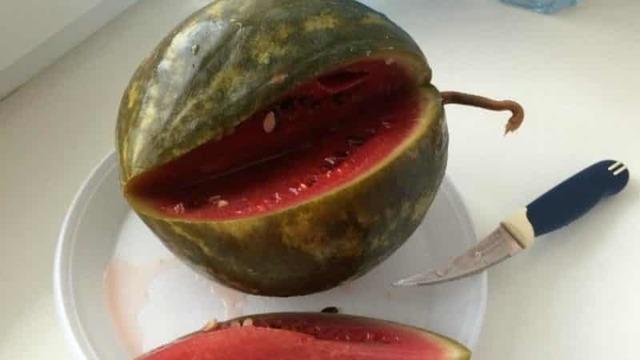 Мочёный арбуз на зиму - пошаговый рецепт с фото