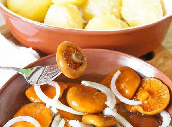 Солёные рыжики на зиму - рецепт приготовления с пошаговыми фото