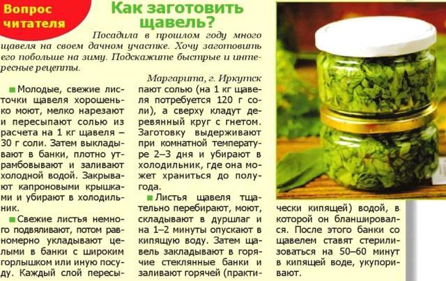 Щавель под капроновую крышку на зиму - рецепт приготовления с пошаговыми фото